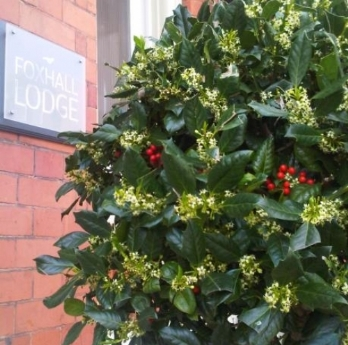 Have you noticed our Ivy trees?